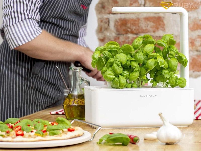 Bộ công cụ trồng rau tại nhà