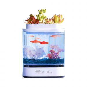 Bể cá thủy sinh mini Xiaomi