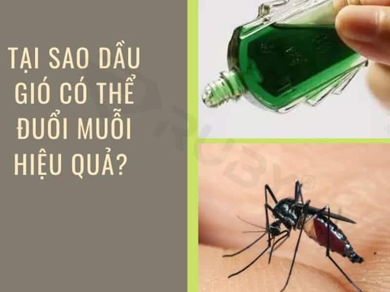 Cách diệt muỗi tại nhà hiệu quả bằng dầu gió