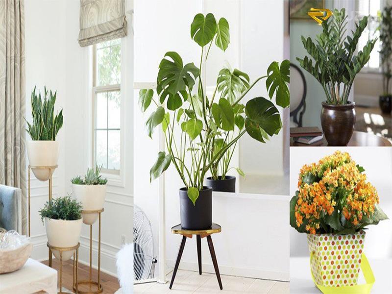trồng cây xanh khử mùi hôi hiệu quả