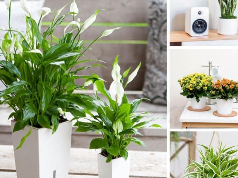 trồng cây xanh lọc không khí trong nhà