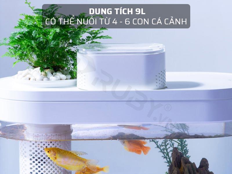 Dung tích 9L, có thể nuôi từ 4 - 6 con cá cảnh