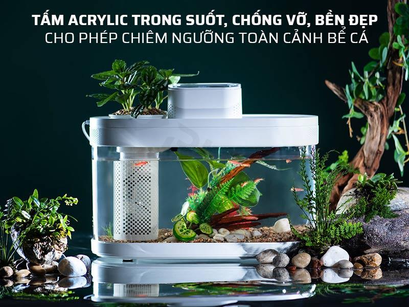Hồ cá mini trang bị tấm Acrylic trong suốt, chống vỡ, bền đẹp